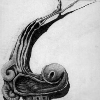 Mollusk drawing